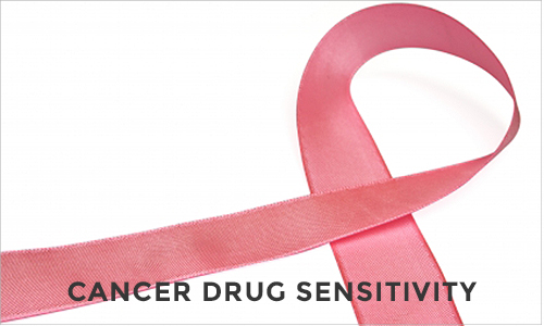 Cancer drug sensitivity testing